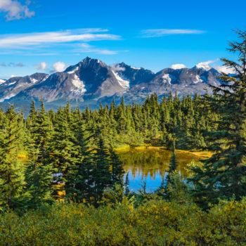 Alaska Wildlife Rescue Release Site Volunteer