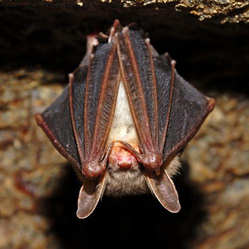 Bat Rescue Alaska