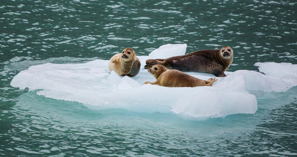 Marine Mammal Rescue Alaska